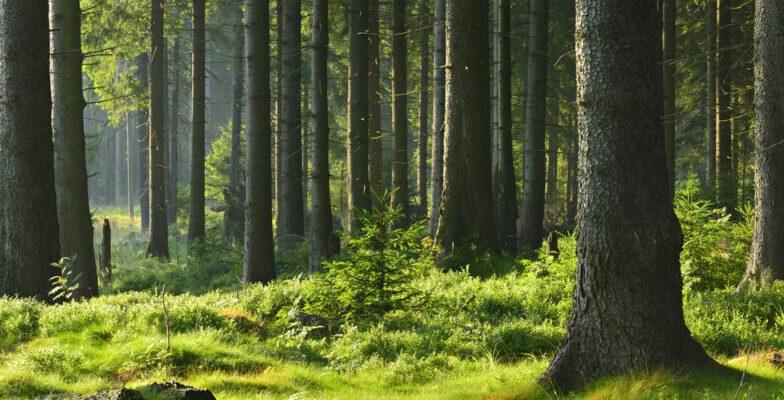 Seguro responsabilidad civil empresas forestales